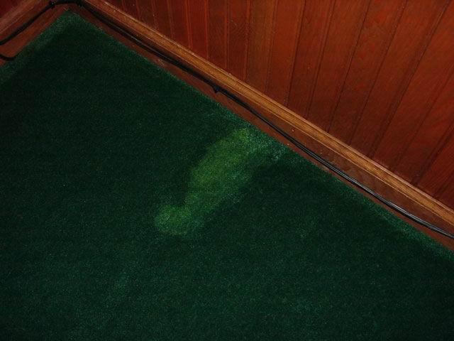how to remove cat urine on carpet